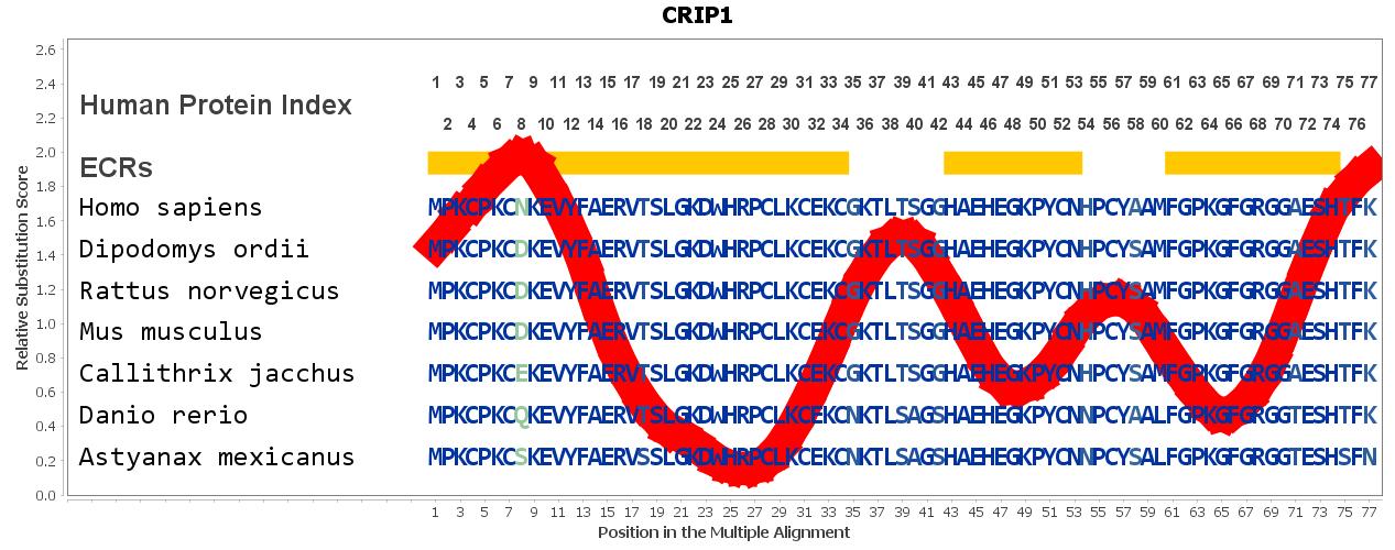 CRIP1 Gene - GeneCards | CRIP1 Protein | CRIP1 Antibody