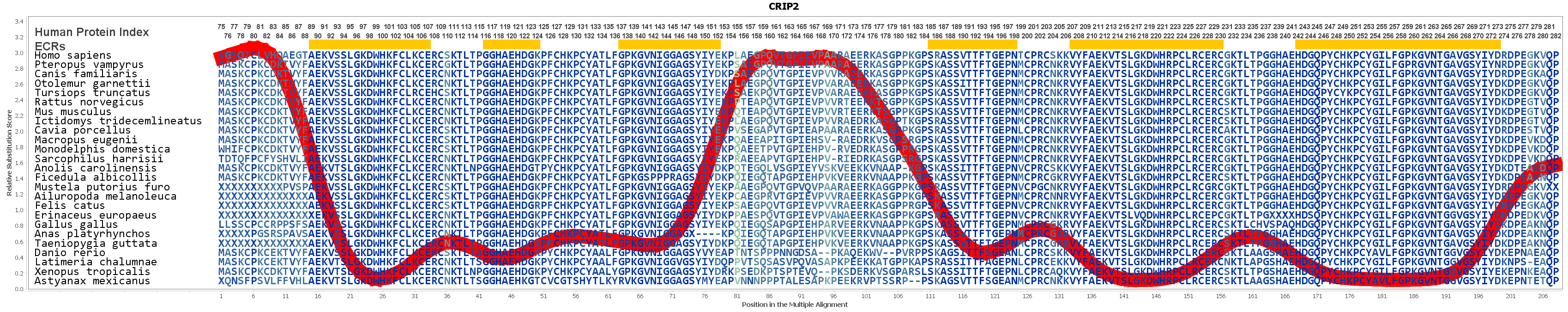 CRIP2 Gene - GeneCards | CRIP2 Protein | CRIP2 Antibody