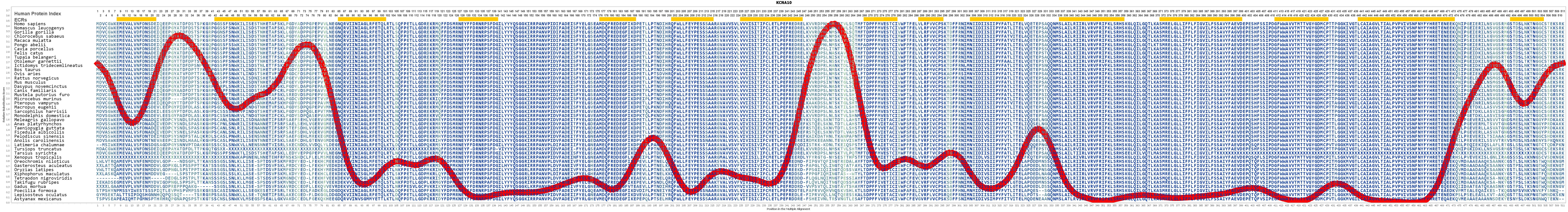 Kcna10 Gene Genecards Kca10 Protein Antibody Taurus Schematics 740 Evolution For