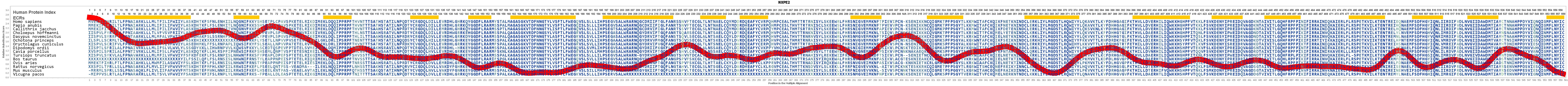 NXPE2 Gene - GeneCards | NXPE2 Protein | NXPE2 Antibody