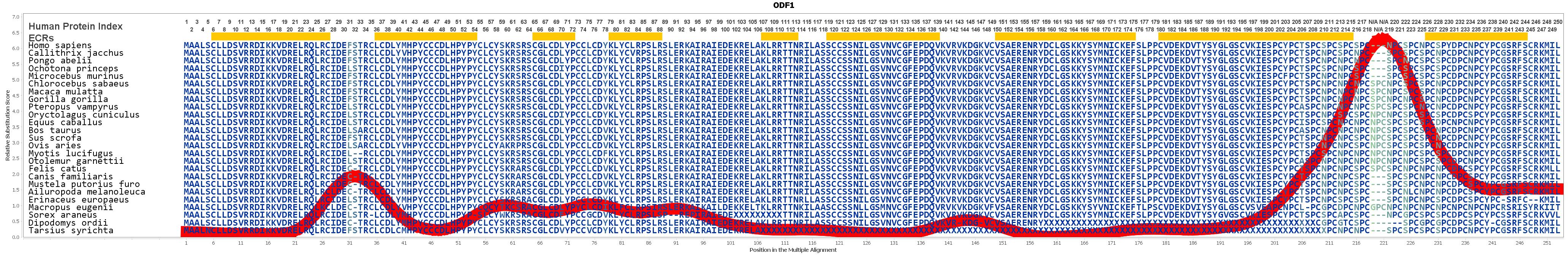 ODF1 Gene GeneCards ODFP1 Protein