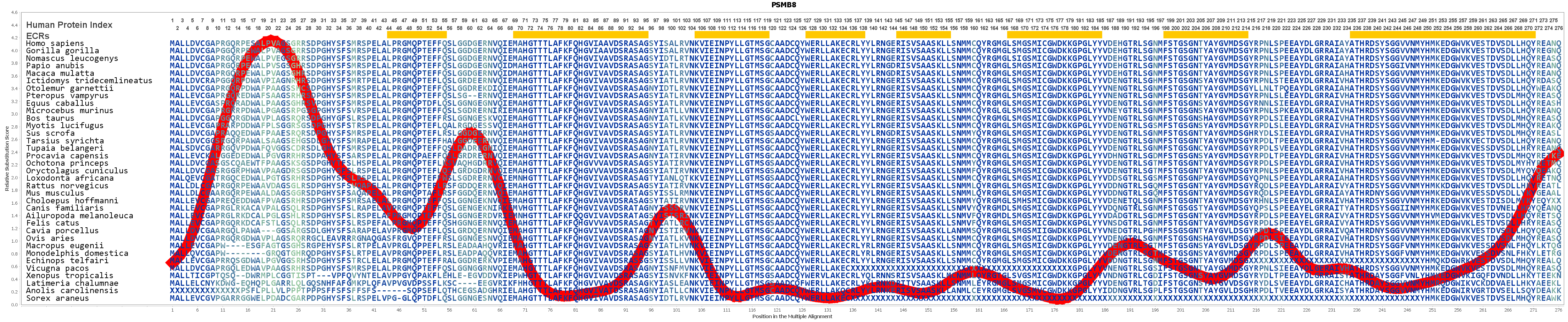 PSMB8 Gene - GeneCards | PSB8 Protein | PSB8 Antibody
