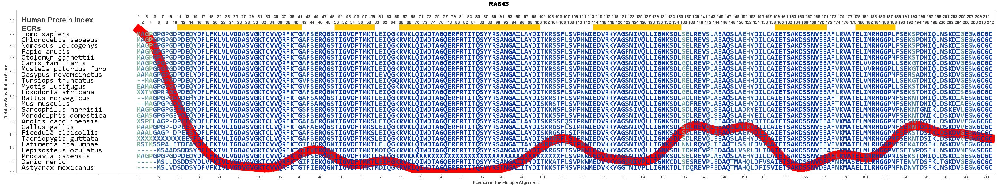 RAB43 Gene - GeneCards | RAB43 Protein | RAB43 Antibody
