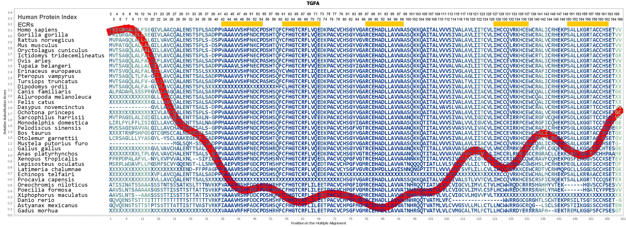 TGFA Gene - GeneCards | TGFA Protein | TGFA Antibody