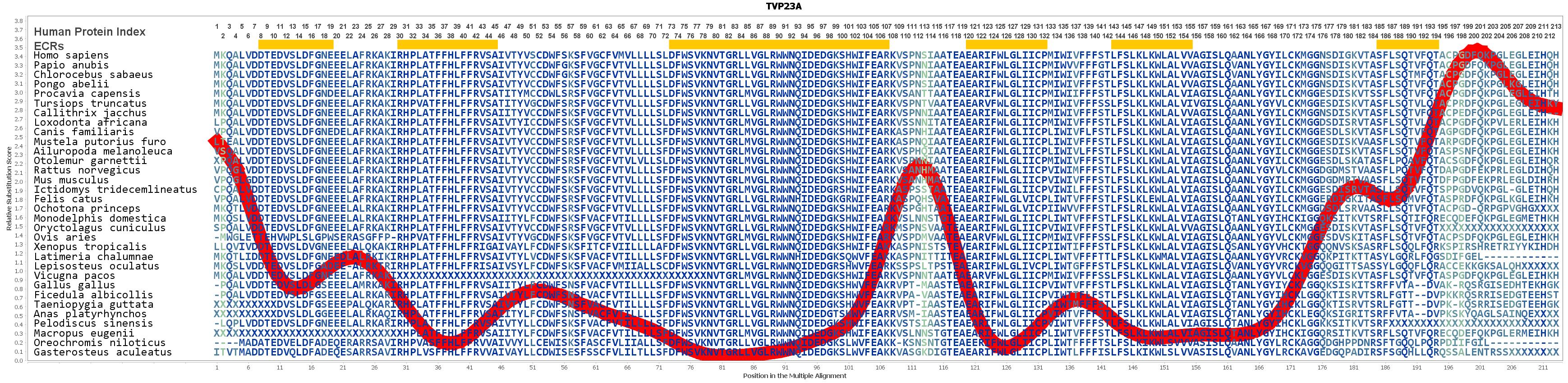 Evolution for TVP23A Gene
