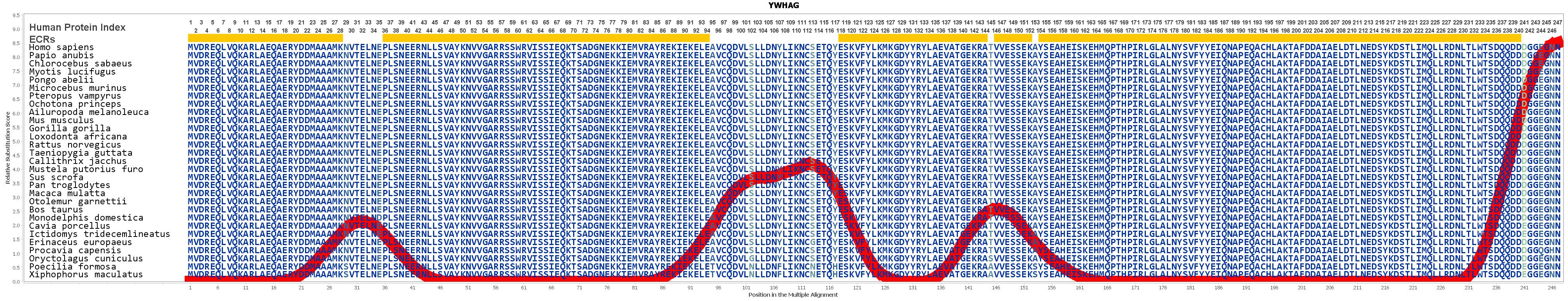 YWHAG Gene GeneCards 1433G Protein